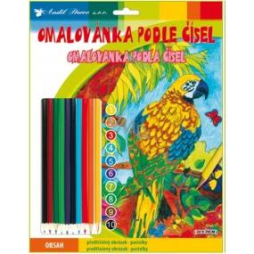 Omalovánky podle čísel s pastelkami Papoušek 24 x 29 cm