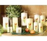 Lima Květina Tulipán vonná svíčka bílá s obtiskem tulipán hranol 45 x 120 mm 1 kus