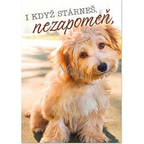 Ditipo Hrací přání I když stárneš, nezapomeň Petr Novák Přátelství na n-tou 224 x 157 mm