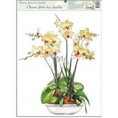 Room Decor Okenní fólie bez lepidla orchideje žluto-bílá 42 x 30 cm