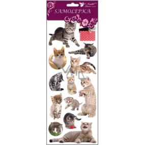 Samolepky kočky, kočka v trávě 34,5 x 12,5 cm