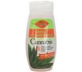 Bione Cosmetics Cannabis šampon na mastné vlasy 260 ml