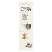 Albi Magnetické minizáložky Koťátka průměr 3 cm 4 kusy