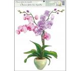 Room Decor Okenní fólie orchideje světle růžová 42 x 30 cm