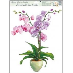 Room Decor Okenní fólie bez lepidla orchideje světle růžová 42 x 30 cm