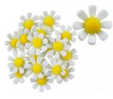 Květy z filcu s lepíkem bílé dekorace 3,5 cm v krabičce 18 kusů