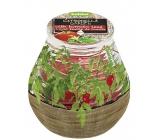 Bolsius Aromatic Citronela ve skle desing Bylinky cherry rajčátka vonná svíčka 90 x 94 mm