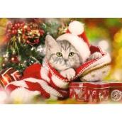 Nekupto Pohlednice vánoční Koťátko 15 x 11 cm