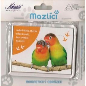 Nekupto Mazlíci magnetický obrázek 004 Papoušci