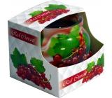 Admit Red Currant - Červený rybíz dekorativní aromatická svíčka ve skle 80 g
