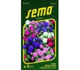 Semo Astra Čínská nízká Colour Carpet - směs 0,5 g