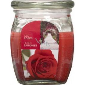 Bolsius Aromatic Wild Rose - Divoká Růže vonná svíčka ve skle 92 x 120 mm 830 g, doba hoření 100 hodin