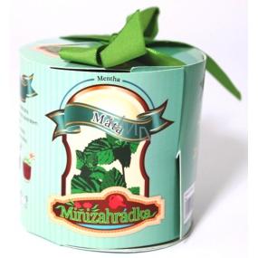 Albi Minizahrádka Máta válec dárkové balení sady na pěstování bylinky