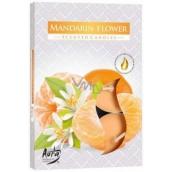 Bispol Aura Mandarin Flower - Květy mandarinky vonné čajové svíčky 6 kusů