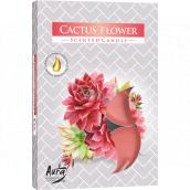 Bispol Aura Cactus Flower - Květ kaktusu vonné čajové svíčky 6 kusů