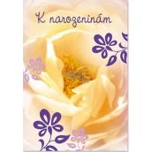 Ditipo Hrací přání k narozeninám Žlutý květ No Name Lekná 224 x 157 mm