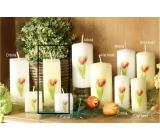 Lima Květina Tulipán vonná svíčka slonová kost s obtiskem tulipán hranol 45 x 120 mm 1 kus
