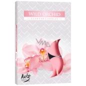 Bispol Aura Wild Orchid - Divoká orchidej vonné čajové svíčky 6 kusů